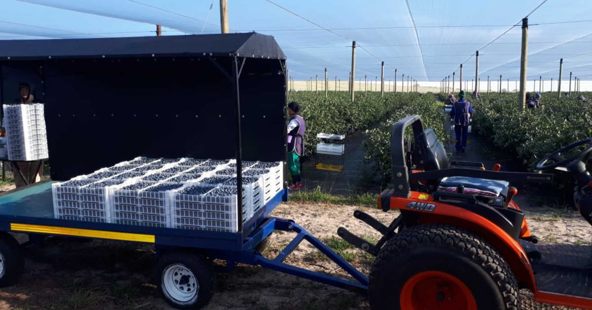 Read more about the article Pringle Fruit Farms and Baleka Freight – A flourishing partnership